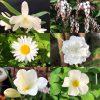 白い花の名前と咲く木-頃(春)-花言葉と綺麗な画像まとめ・英語で何?