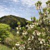 白い小さな可愛い花(春)が咲く植物の名前と花言葉・種類と画像・英語