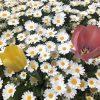 春の可愛い花たちの名前・花のある風景・画像-写真(高画質)と花言葉