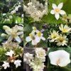 初夏に咲く美しい白い花たちの植物の名前と花言葉・種類と画像・英語