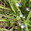 春の野の花vol.2-草花の名前と画像・花言葉と由来・河川敷に咲く植物